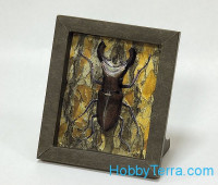 "Collectible frame ""Beetle"""