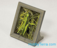 "Collectible frame ""Grasshopper"""